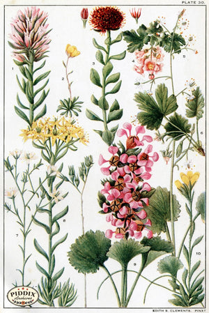Flowers Pdxc11404 Color Illustration