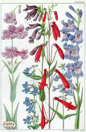 Flowers Pdxc11405 Color Illustration