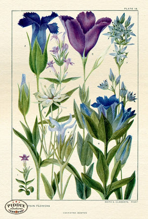 Flowers Pdxc11408 Color Illustration