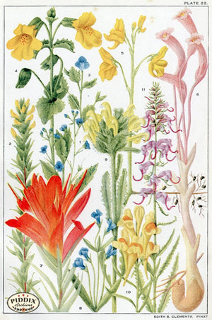 Flowers Pdxc11409 Color Illustration