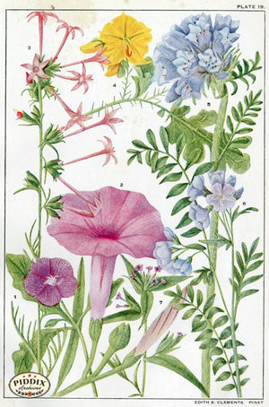 Flowers Pdxc11410 Color Illustration