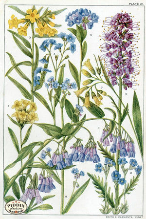 Flowers Pdxc11411 Color Illustration