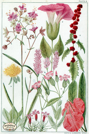 Flowers Pdxc11412 Color Illustration