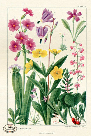 Flowers Pdxc11413 Color Illustration