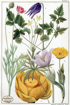 Flowers Pdxc11414 Color Illustration