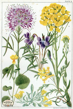 Flowers Pdxc11416 Color Illustration
