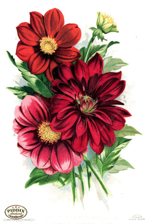 Flowers Pdxc1568 Color Illustration