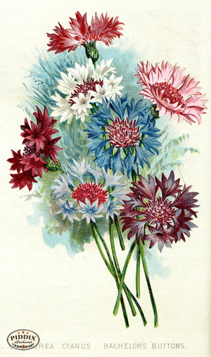Flowers Pdxc1575 Color Illustration
