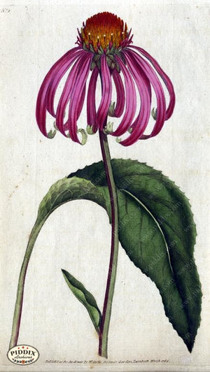 Flowers Pdxc1724A Color Illustration