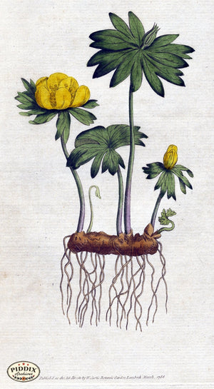 Flowers Pdxc1725 Color Illustration