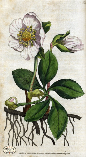 Flowers Pdxc1729 Color Illustration