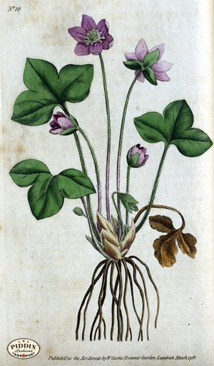 Flowers Pdxc1731 Color Illustration