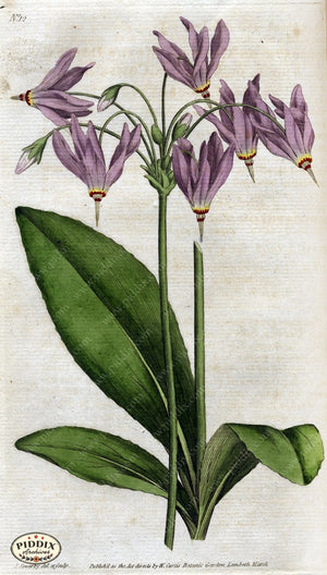 Flowers Pdxc1732 Color Illustration