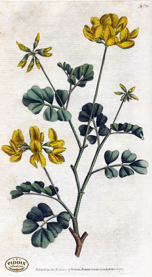 Flowers Pdxc1733 Color Illustration
