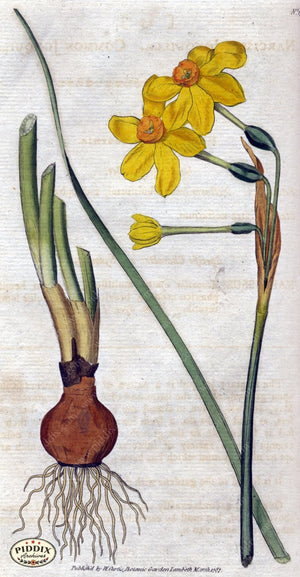 Flowers Pdxc1734 Color Illustration
