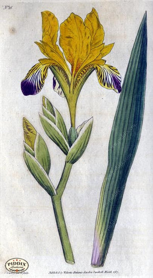 Flowers Pdxc1735A Color Illustration