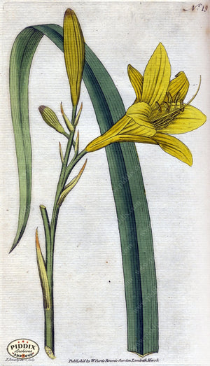 Flowers Pdxc1736 Color Illustration