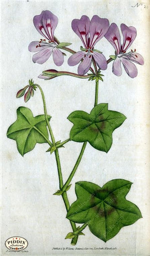 Flowers Pdxc1737 Color Illustration