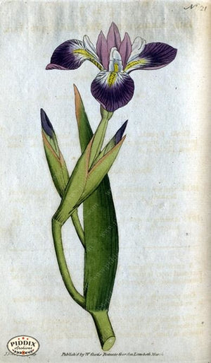 Flowers Pdxc1738 Color Illustration