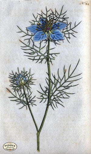 Flowers Pdxc1739A Color Illustration