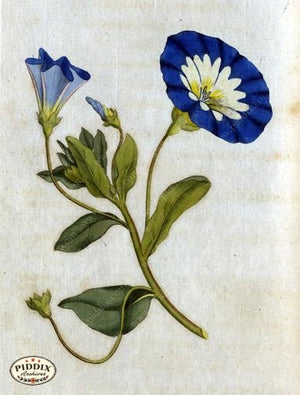 Flowers Pdxc1741 Color Illustration