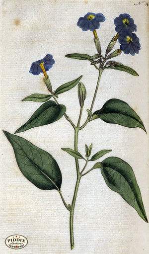 Flowers Pdxc1744 Color Illustration