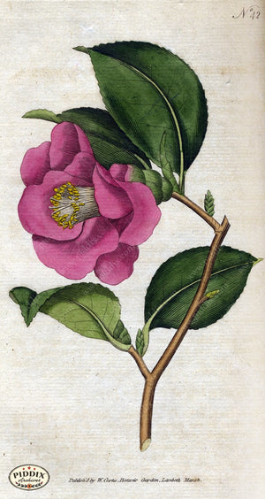 Flowers Pdxc1747 Color Illustration
