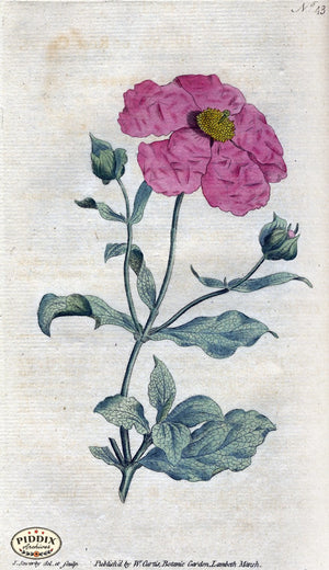 Flowers Pdxc1749 Color Illustration