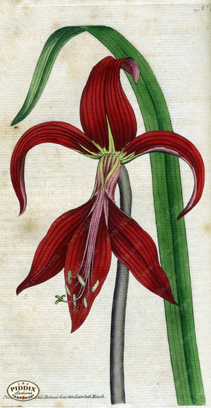 Flowers Pdxc1751 Color Illustration