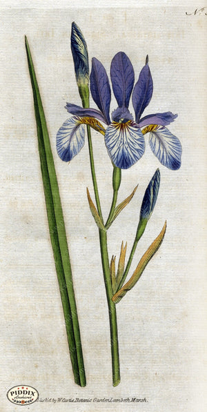 Flowers Pdxc1755 Color Illustration