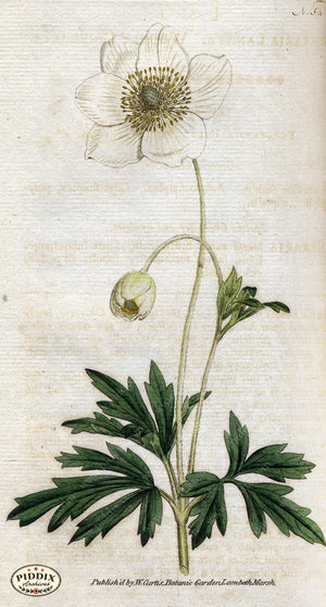 Flowers Pdxc1756 Color Illustration