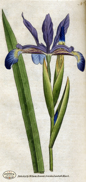 Flowers Pdxc1758 Color Illustration