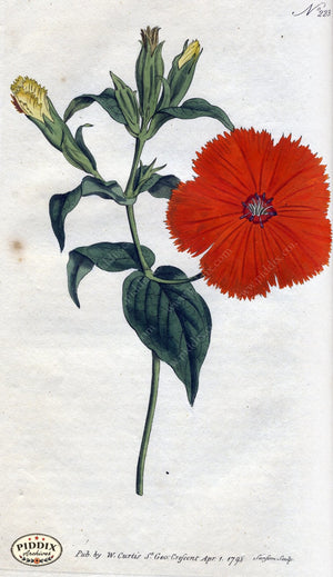 Flowers Pdxc1762 Color Illustration