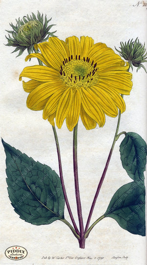 Flowers Pdxc1763 Color Illustration
