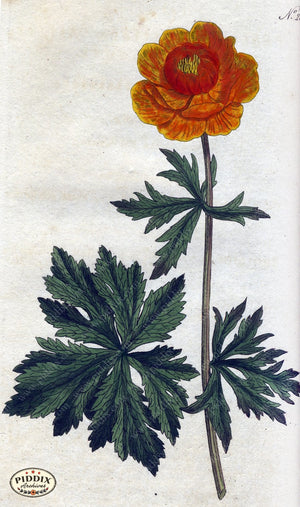 Flowers Pdxc1764 Color Illustration