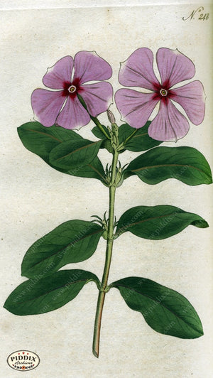 Flowers Pdxc1765 Color Illustration