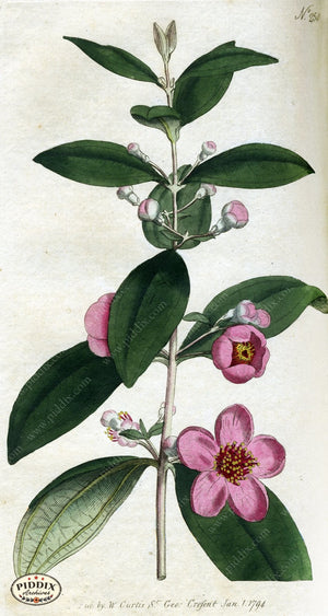 Flowers Pdxc1766 Color Illustration