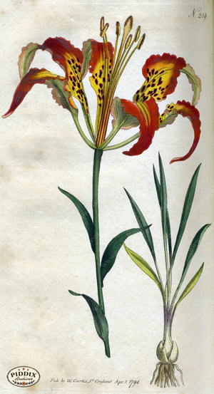 Flowers Pdxc1768 Color Illustration