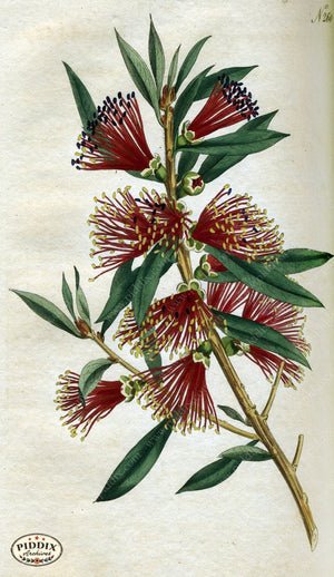 Flowers Pdxc1769 Color Illustration