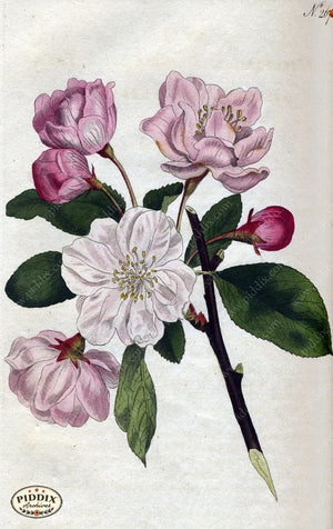 Flowers Pdxc1770 Color Illustration