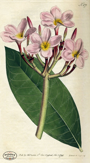 Flowers Pdxc1771 Color Illustration