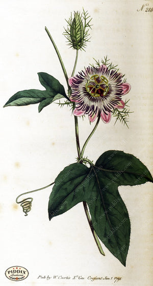 Flowers Pdxc1773 Color Illustration
