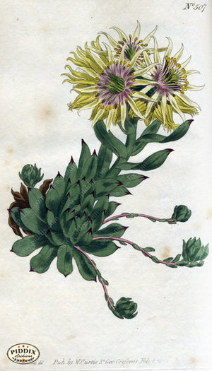 Flowers Pdxc1774 Color Illustration
