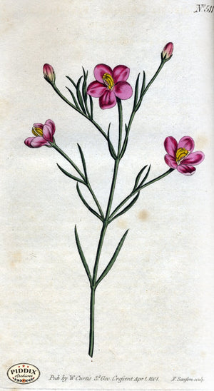 Flowers Pdxc1775 Color Illustration