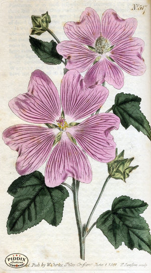 Flowers Pdxc1776 Color Illustration