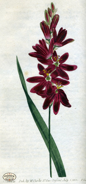 Flowers Pdxc1777 Color Illustration