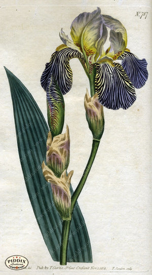 Flowers Pdxc1787 Color Illustration