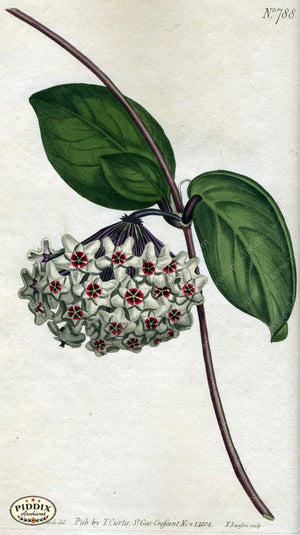 Flowers Pdxc1788 Color Illustration