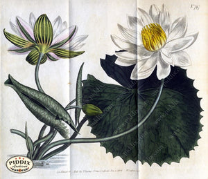 Flowers Pdxc1789 Color Illustration