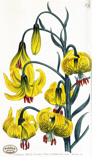 Flowers Pdxc1790 Color Illustration